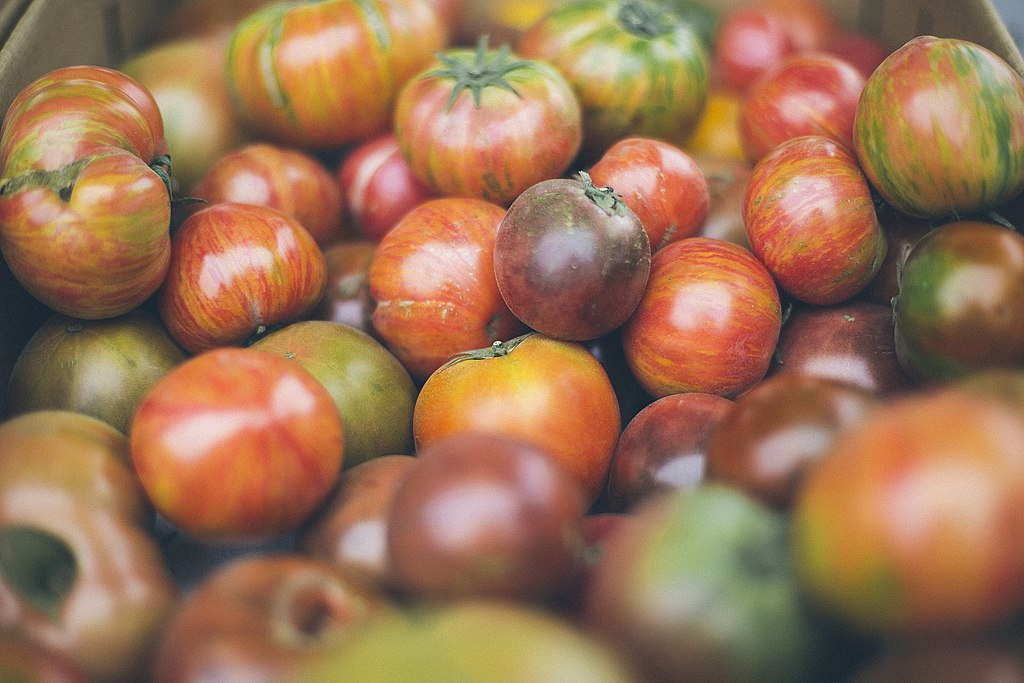 New writing: Tomatoes – Heritage or Hate